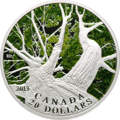 canada maple canopy spring silver